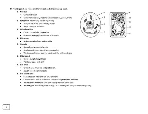 Looking Inside Cells Worksheet by All Worksheets 187 Cell Organelle Worksheet Answers Free