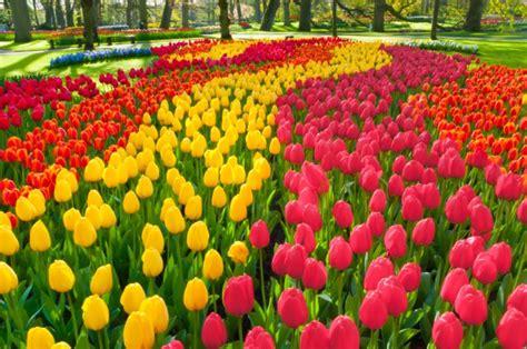 parco fiori olanda tour dei paesi bassi in primavera 1 176 maggio 7 notti in