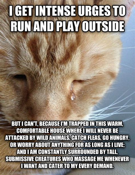 Cat Problems Meme - livememe com first world cat problems