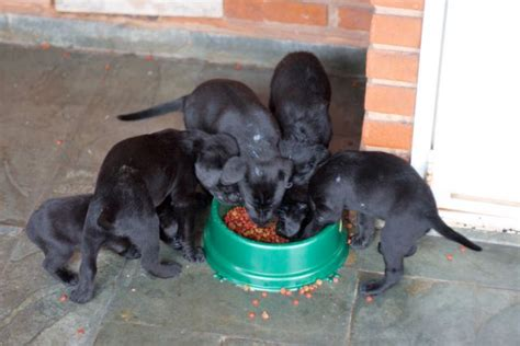 food aggression in puppies an easy way to prevent food aggression in dogs psychology today