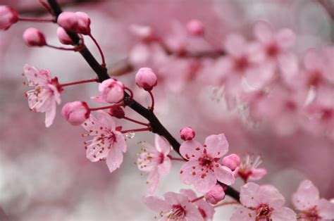 These Small Flowers Are Insanely Beautiful 50 Photos Cherry Blossom Flower