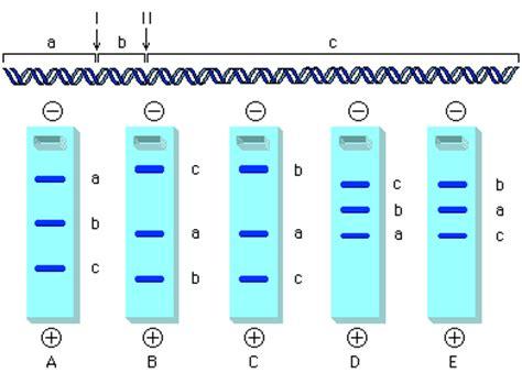ph school lab bench ph school biology lab bench 28 images ph school