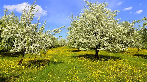 Kleine Bäume Für Garten 1254 by Die 103 Besten Fr 252 Hlingsbilder Hintergrundbilder