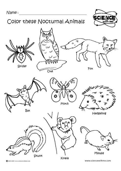 wild animals coloring pages preschool 11 best nocturnal animal themes images on pinterest