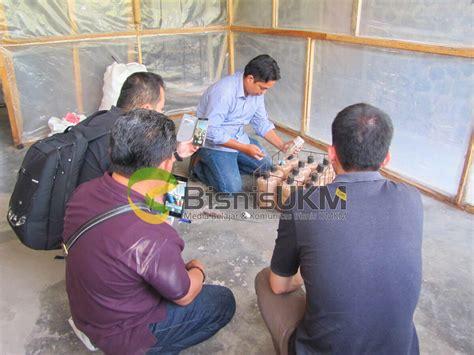 Agen Bibit Jamur Tiram peserta praktek penanaman bibit jamur media 54438 bisnisukm