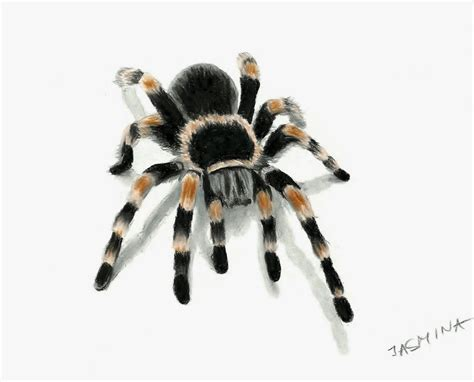3d Drawing Of Tarantula Spider By Jasminasusak On Deviantart 3d Spider