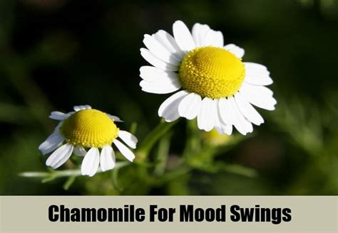 natural remedy for mood swings 5 top herbal remedies for mood swings how to treat mood