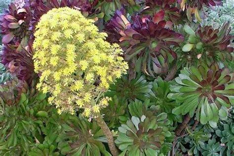 fiori da giardino autunnali fiori autunnali piante perenni 10 fiori autunnali