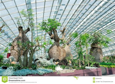 Green House Plans baobab trees in gardens by the bay singapore stock photo
