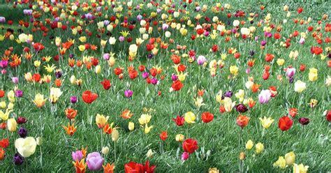 Ideen Gartengestaltung 4581 by Blumenwiese Pflanzen Ideen Und Tipps Mein Sch 246 Ner Garten