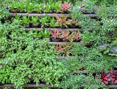 Vertical Gardening Techniques Vertical Gardening Tips And Tricks For Green Living