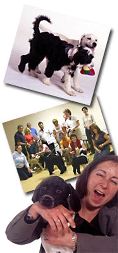 puppy school near me puppy classes near me location map