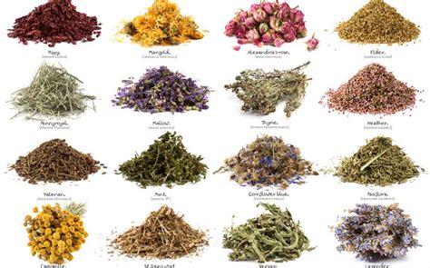 imagenes de flores medicinales 15 plantas medicinales que arruinar 237 an las farmac 233 uticas