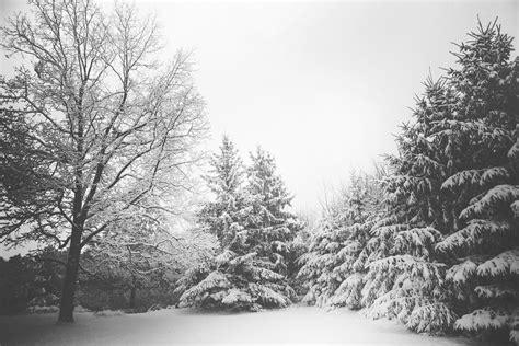black winter winter pictures 183 pexels 183 free stock photos