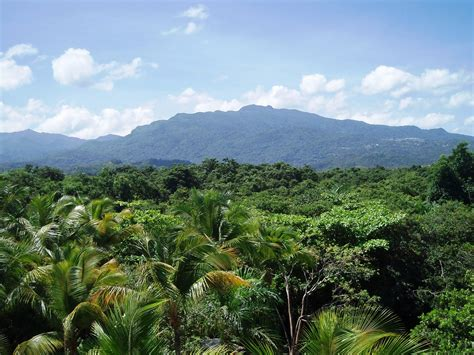 Canopy Amazon by Phoebettmh Travel Puerto Rico A Journey To El Yunque