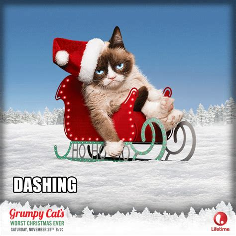 Grumpy Cat Snow Meme - grumpy dashing through gifs gif funny laughter hilarious