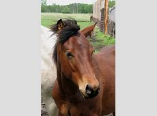 Horse Closeup Free Stock Photo - Public Domain Pictures My Online Account