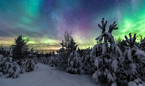 northern lights trees stunning pictures show snow covered trees lit up by