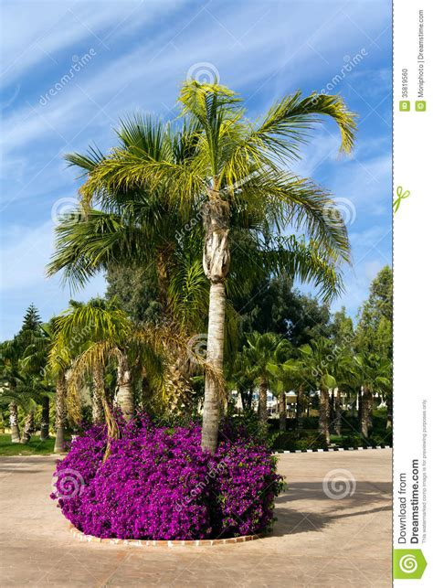 tropical palm garden with flowers stock photo image