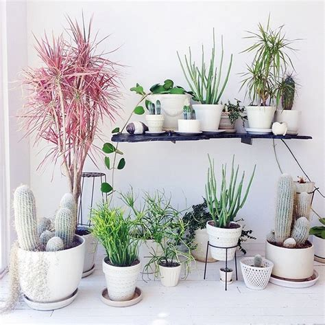 plants home decor creative ways to decorate your home with plants diy home