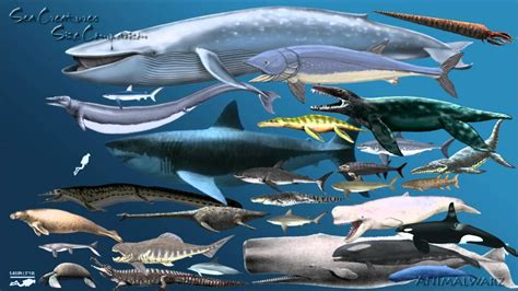 blue whale vs whale shark whale shark blue whale size comparison