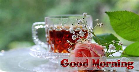 bengali good morning sms good morning sms messages in bangla good morning quotes