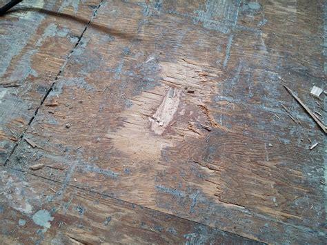 Removing Parquet Flooring   Flooring Ideas and Inspiration