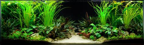 plants for tropical aquarium the key to a successful planted fish tank aquarium