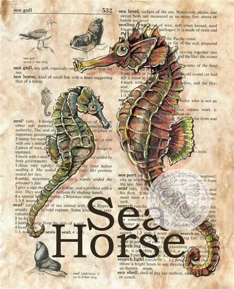 doodle free dictionary 159 best images about seahorse on