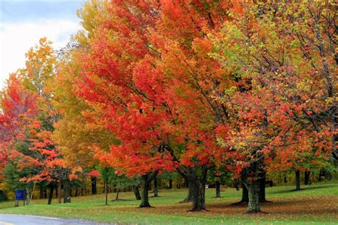 top 10 fall color destinations in usa a listly list