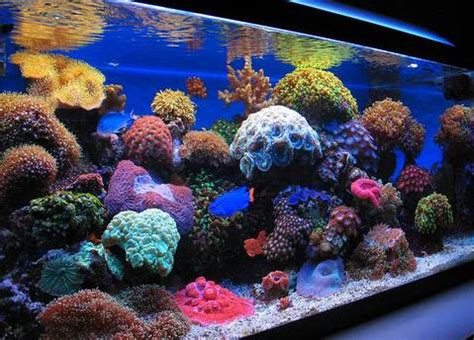Aquascapes Online Nano Reef Tank 5 Things You Need To Know