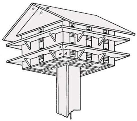 bird house plans for sparrows 17 best ideas about purple martin on pretty birds birds and colorful birds