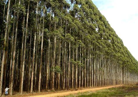 albero da giardino sempreverde alberi sempreverdi da giardino alberi piante