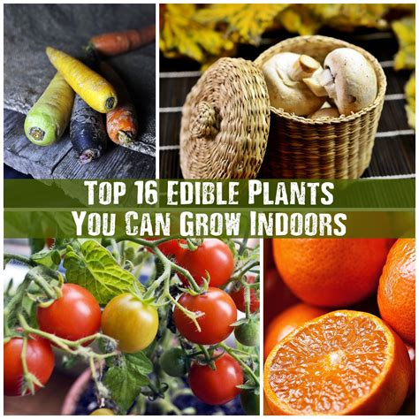 10 best plants you can grow indoors for air purification top 16 edible plants you can grow indoors shtf prepping