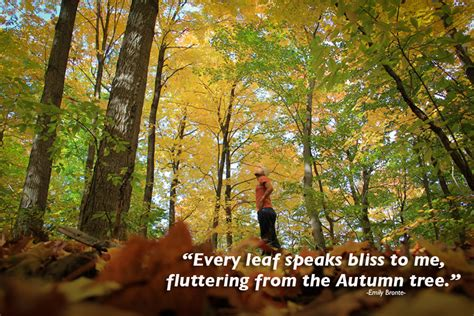 quotes about fall colors quotesgram quotes about autumn or fall quotesgram