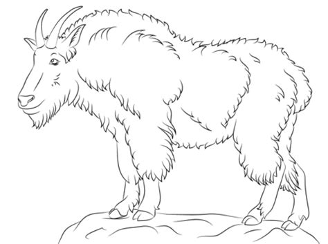 realistic goat coloring pages mountain goat coloring page free printable coloring pages