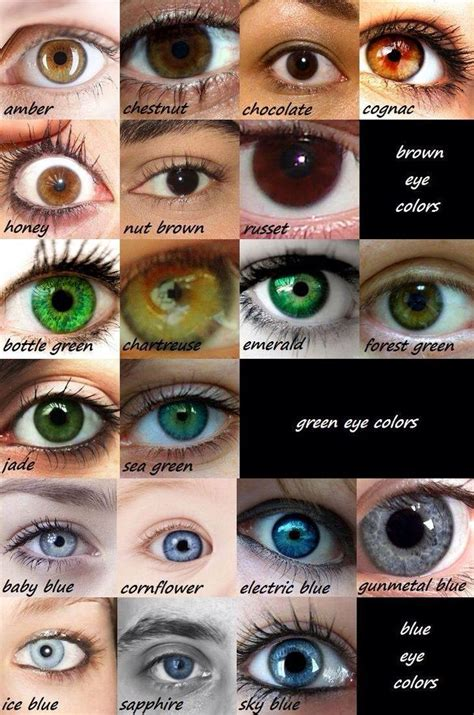 1000 ideas about eye color charts on