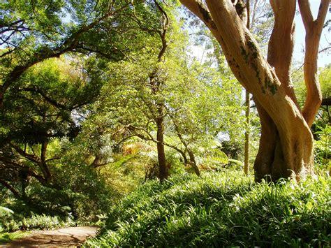 Clusia Wahiawa Botanical Garden