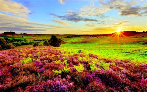 nature purple flowers green grass meadow  sun rays