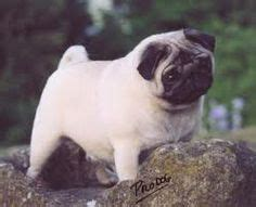 pug paint me like 1000 images about dogs i on pug bulldogs and pug