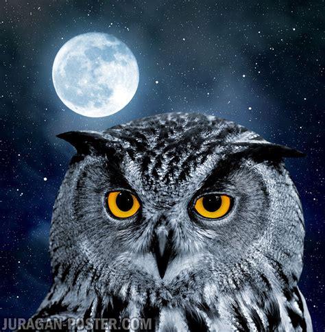 Animasi Burung Hantu Owl Bird owl jual poster di juragan poster
