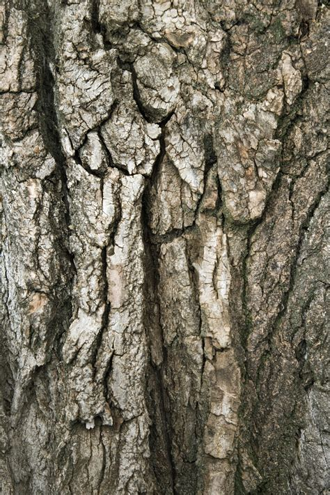 bark color how to paint faux tree bark ehow