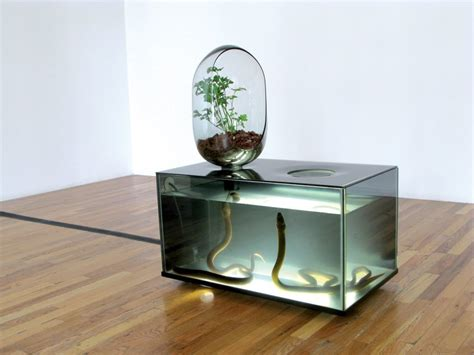 indoor eco system with freshwater fish amp vegetable patch