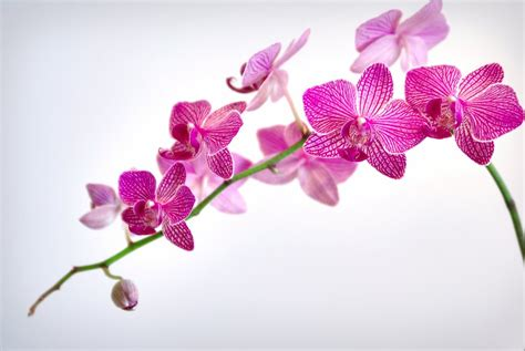 orchid fertilizer essential tips