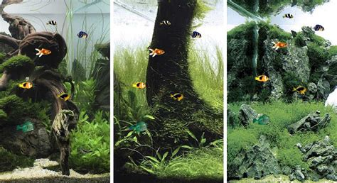 aquarium  fish  wallpapers  android
