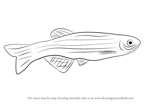 zebrafish coloring page learn how to draw a zebrafish fishes step by step