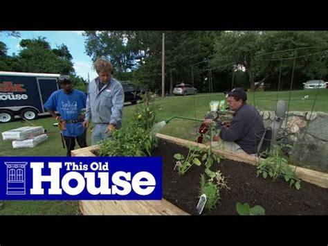 plant  raised garden bed   house youtube