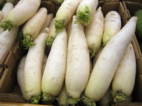 Ripped List White Rawis radish facts health benefits nutritional value and pictures