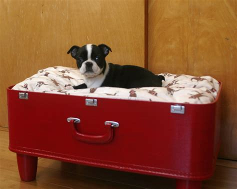 suitcase dog bed roosevelt kid d i y suitcase dog bed