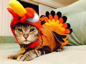 happy thanksgiving cats your daily cute happy thanksgiving and cats in turkey